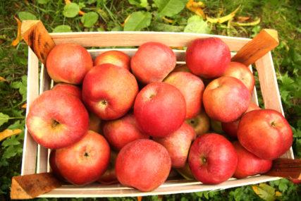 DVOJAC POČINIO VIŠE KRAĐA Ukrali dvije kamere i 300 kilograma jabuka