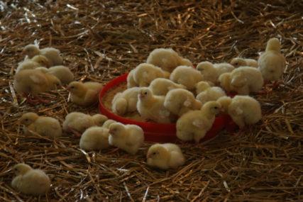 ZARAZA SE ŠIRI Ptičji grip zabilježen u Ukrajini, novi slučajevi i u OVOJ zemlji