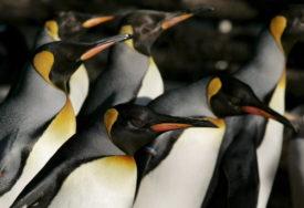 PROSLAVILA 41. ROĐENDAN Najstariji pingvin na svijetu u Ginisovoj knjizi rekorda