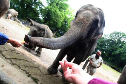 NEOBIČNA AKCIJA U LONDONU Krdo slonova promoviše suživot ljudi i životinja