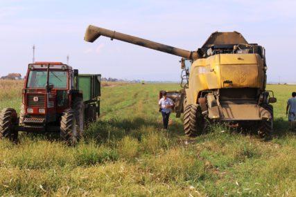 AMBARI PUNI Odličan rod kukuruza u Lijevču i Potkozarju