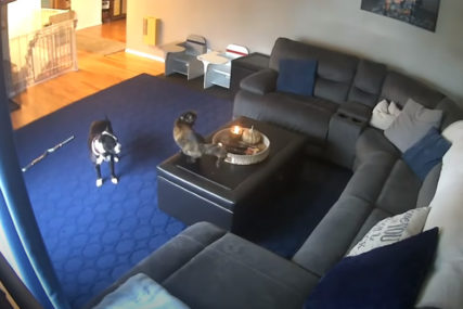 VIŠE SE UPLAŠIO PAS Reakcija mačke kojoj se zapalio rep postala hit (VIDEO)