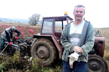 """""""KUPCE PRONALAZIM SAM"""" Slobodan je ove godine uzgojio 120 tona krompira, kvalitet odličan (FOTO)"""