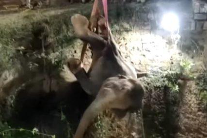 ŽIVOTINJU SPASAVALI 12 SATI Nesrećni slon zalutao u selo, pa upao u bunar (VIDEO)