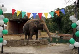 """LIJEPE VIJESTI Kavan, """"najusamljeniji slon na svijetu"""", stigao u rezervat u Kambodži"""