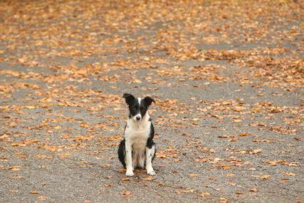Brčak optužen za mučenje životinje: Vezao psa za moped i vukao ga velikom brzinom