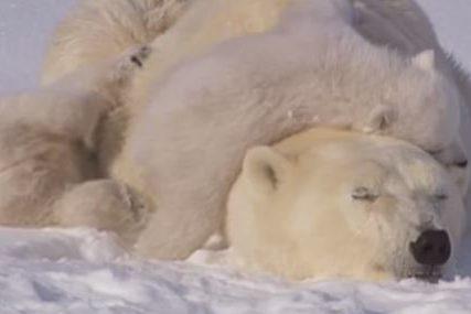 PRILAGOĐAVANJE DRUGAČIJIM USLOVIMA Klimatske promjene stvorile novu životinjsku vrstu (FOTO)
