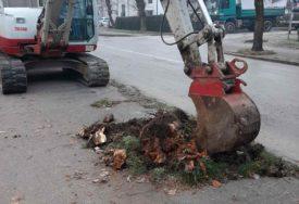 BANJALUKA DOBIJA NOVE DRVOREDE Završavaju se radovi na jesenjoj sadnji stabala