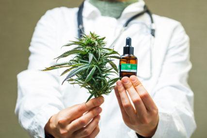 BOLJE ILEGALNO ŽIV, NEGO LEGALNO MRTAV Kada će BiH ozakoniti upotrebu marihuane za liječenje
