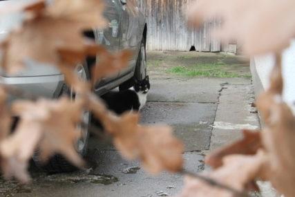 """""""NAVODNO VRIJEĐAO DRUGA DVA NARODA"""" Srbin u Odžaku kažnjen zbog vožnje badnjaka i isticanja zastave Srbije"""
