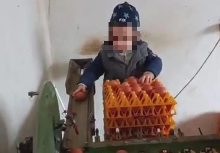 """""""TO ĆE BITI DOMAĆIN ČOVJEK"""" Dječak koji neumorno radi na djedovoj farmi pobrao je brojne simpatije (VIDEO)"""