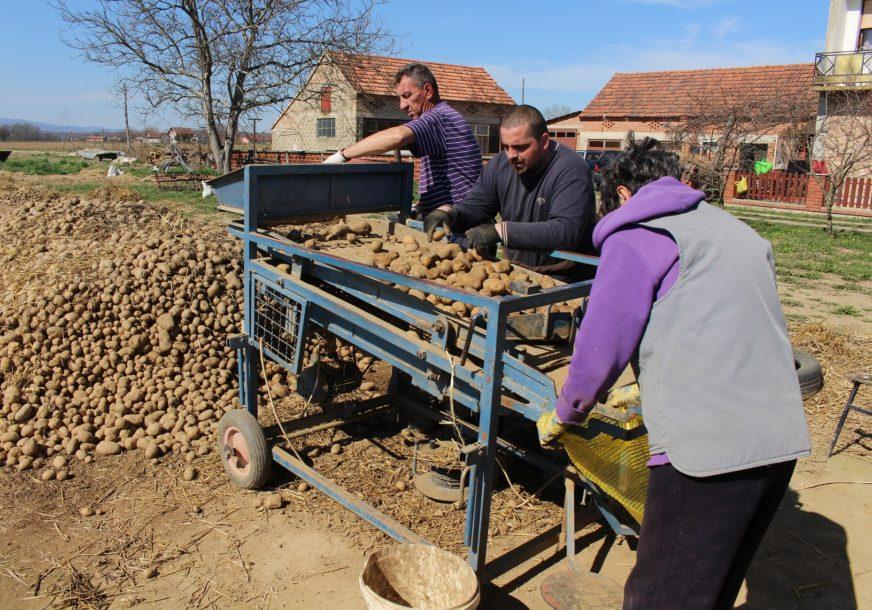NEDAĆE LIJEVČANSKIH RATARA Zbog niskih cijena tvrde da su prinuđeni da UNIŠTAVAJU krompir