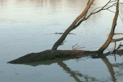 Rijeka nosi stabla, drvo, razne predmete i mnogo smeća: Raste nivo Save kod Gradiške, vodostaj 590 centimetara iznad normale