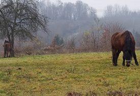 NEOBIČNA INTERVENCIJA Konj bio zaglavljen dva dana u blatu kod Livna, a onda su došli hrabri spasioci (FOTO)