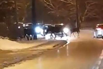 NEOBIČAN PRIZOR Napušteni konji kod Sarajeva izašli na ulicu i ZAUSTAVILI SAOBRAĆAJ