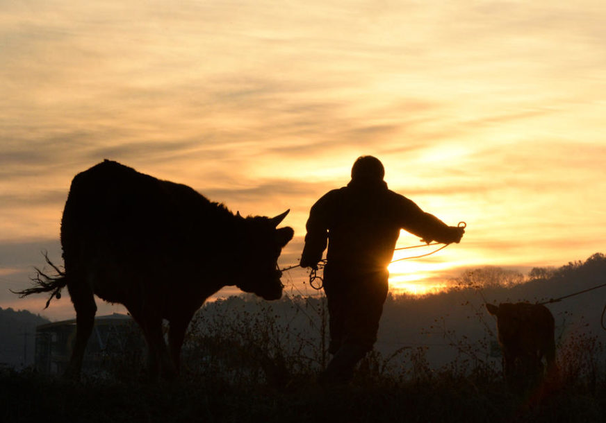 Zabilježen značajan rast izvoza: Poljoprivreda posebna šansa Srbije