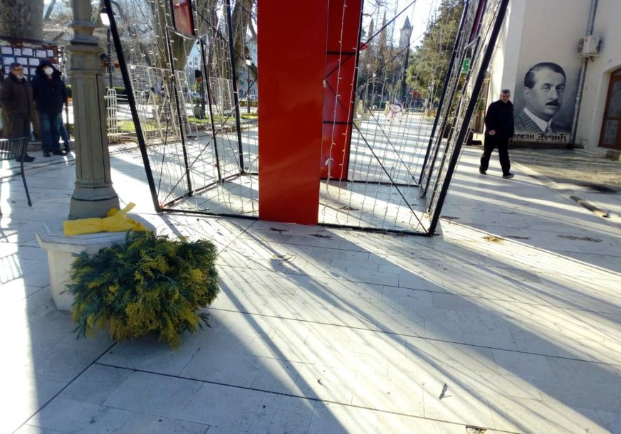 Žuti cvijet podsjeća na proljeće: Na jug Hercegovine STIGLA MIMOZA