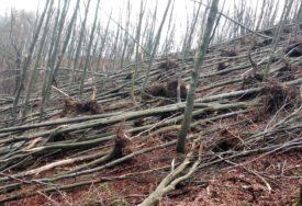 Nevrijeme srušilo 1.500 stabala: Šumsko gazdinstvo planira sanaciju štete
