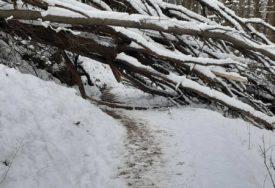 NEPRIJATNO IZNENAĐENJE ZA ŠETAČE Staza na Trešnjiku zakrčena porušenim stablima (FOTO)