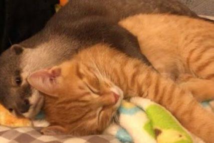 Zadobio smrtonosni ujed: Mačak uginuo nakon što je spasao svoje vlasnike od ZMIJE OTROVNICE (FOTO)