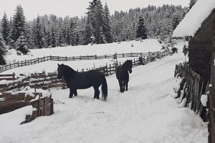 """""""SVAKI DAN JE NOVI IZAZOV"""" Tadija Tadić ima 45 konja i u stalnoj je borbi s prirodom (FOTO, VIDEO)"""