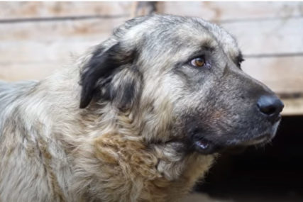 ŠOK NAKON NEZAPAMĆENE TRAGEDIJE Ljekari nisu mogli da priđu izujedanoj ženi jer je pas bio agresivan