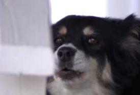 """""""Ovakvo nešto niko nije zaslužio"""" Žena krvnički nožem izbola svog miroljubivog psa, reagovala policija"""