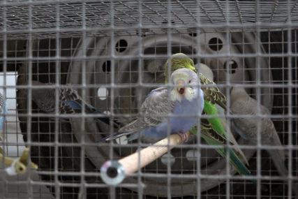PTICE, ZEČEVI, ČINČILE Odražan sajam sitnih životinja u Prnjavoru