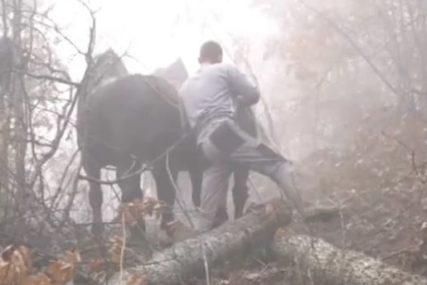 """Nenad i Saša rade jedan od NAJTEŽIH POSLOVA """"Svi vole da vide konja, ali kad ga pustim, nekako se uplaše"""" (FOTO)"""