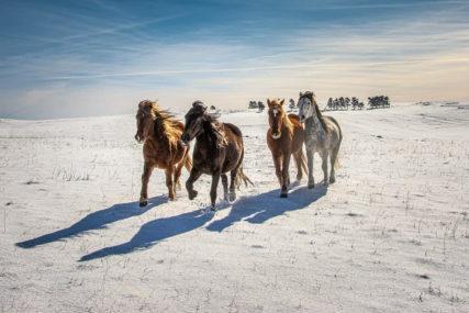 Ni Island, ni Sibir nego BiH:  Divlji konji i snježno prostranstvo OČARALI SVJETSKOG PUTNIKA (FOTO, VIDEO)