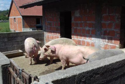 NE ODUSTAJU Semberci spremni i na radikalnije poteze za zaštitu domaće proizvodnje