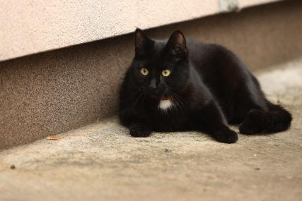 NA PRVOJ LINIJI ODBRANE Azil za životinje u Čikagu pustio na ulice 1.000 mačaka kako bi riješile problem najezde pacova
