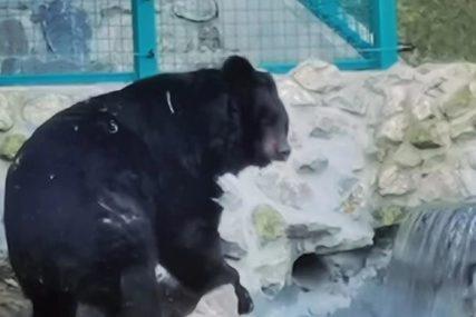 Staro vjerovanje za Sretenje Gospodnje: Medvjed Uroš otkriva koliko će još trajati ZIMA (FOTO)
