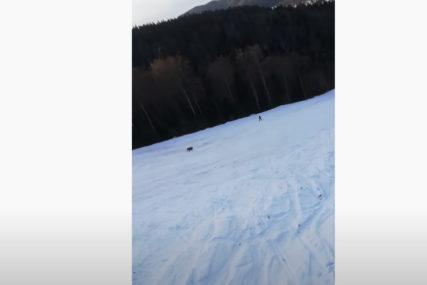 JEDVA IZVUKAO ŽIVU GLAVU Medvjed presreo čovjeka dok je skijao, ljudi zviždali da mu odvuku pažnju (VIDEO)