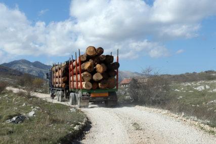 Šume u kandžama lokalnih moćnika Dodikove stranke: Šta se krije iza smjene uspješnih direktora