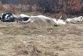 Mještani strahuju od zaraze: Istovarene UGINULE KRAVE u blizini srpskog sela Gubin kod Livna
