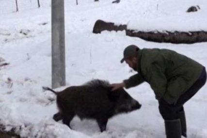 NEOBIČNO PRIJATELJSTVO KOD GACKA Vepar Tito kućni ljubimac lovca Slavka (VIDEO)