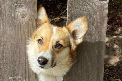 """""""SITUACIJA ALARMANTNA"""" Neko redom truje pse, za 14 dana 11 pojelo otrov, sedam uginulo (FOTO)"""