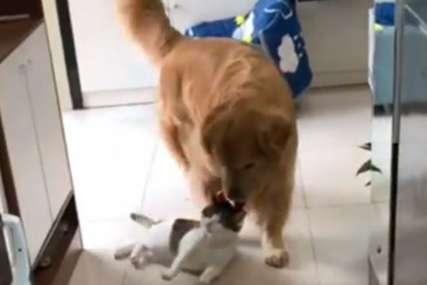 """""""Ne moraš ništa više reći"""" Neobična scena u kojoj su glavne uloge imali pas i mačka postala hit na Instagramu (VIDEO)"""