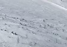 Radoznalo posmatrali ljude: Skijaši snimili ČOPOR VUKOVA na Bjelašnici (VIDEO)