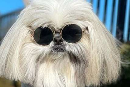 Tajna njegovog uspjeha je u neobičnoj frizuri: Pas preko noći postao zvijezda