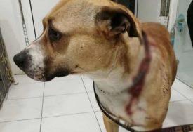 Nožem krvnički izbola svog psa: Protiv vlasnice životinje podnijeta krivična prijava