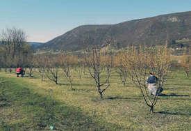 """""""Sve je krenulo prije 22 godine"""" Porodica Pećanac iz Drvara ima plantažu drenjina i kod njih je sve """"PO PROPISU"""""""