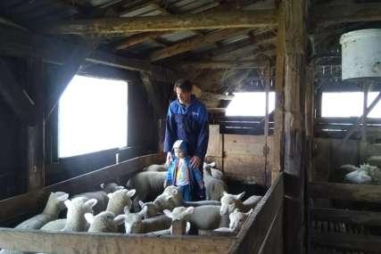 Više mesa i mlijeka: Ovce iz Francuske zaposjele pašnjake oko Milića