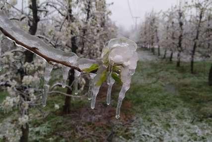 PRVE PROCJENE Mraz najviše štete pričinio u zasadima kruške i šljive u prijedorskoj regiji