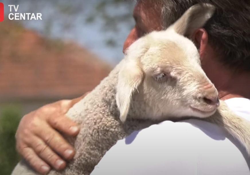 """""""Preživjeće svaki Vaskrs i Đurđevdan"""" Bekan više voli ljude nego stado (VIDEO)"""