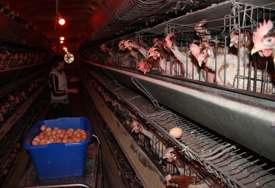 ŽIVINARI ZABRINUTI Spriječiti zloupotrebu uvoza piletine