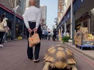 """""""Nisam mislio da će baš ovoliko narasti"""" Dok drugi šetaju pse i mačke, ON VODI KORNJAČU (VIDEO)"""