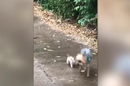 KAKVA LJUBAV Pas po ogromnom pljusku pokazuje malom mačetu put do skloništa (VIDEO)