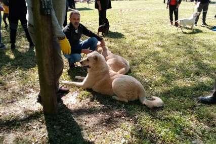 Smotra pasa u Prijedoru: Korona promijenila pravila, ljubimci danas dobijaju ocjene (FOTO)